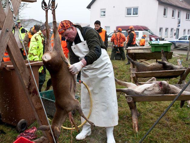 Jagervereinigung Heidenheim Zerwirkkurs In Der Ziegelhutte